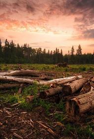 «До последнего дерева»: жители Свердловской области жалуются на массовые вырубки леса