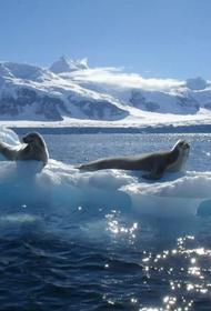 Южный океан теплеет и это ведет к стремительному таянию ледников