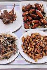 Надёжная альтернатива мясу: зоозащитники из Европы призывают к поеданию насекомых