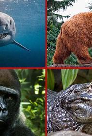 Смертельная встреча: каких животных стоит опасаться