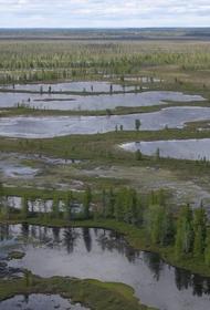 Ученые считают, что торфяники основные поглотители СО2