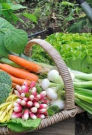 Останемся без овощей: как засуха и жаркий застой влияет на огородников