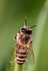 В Удмуртии водитель устроил массовую дорожную аварию после укуса пчелы