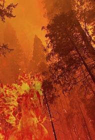 В Истринском районе Подмосковья загорелись около 3,5 гектара леса