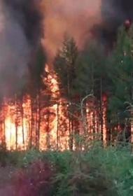 Правительство списывает все провалы в экологии на потепление климата, в том числе и защиту лесов от пожаров