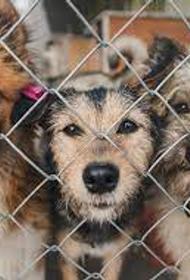 Ресин: осознанность людей в вопросах отношения к животным ощутимо выросла