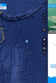 Большой белой акуле Лидии завели собственный аккаунт в Twitter