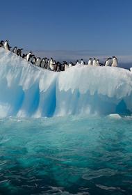 Потепление климата в Антарктиде станет причиной планетарных катаклизмов