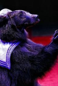 В кузбасском цирке-шапито медведь напал на дрессировщицу