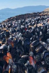 Из-за аномальной жары в Канаде погибло более одного миллиарда морских обитателей
