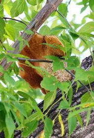 В Челябинской области 41 человек искал заблудившегося юного грибника