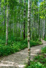 В Челябинской области начался сезон грибов