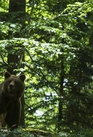 В Туве местный житель получил травму черепа при нападении медведицы