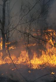 В Якутии медпомощь потребовалась более 100 гражданам из-за дыма от пожаров