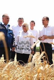 Кубанские аграрии планируют собрать 15 миллионов тонн зерновых и зернобобовых