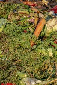 По данным WWF ежегодно 40% еды, производимой в мире, отправляются на помойку