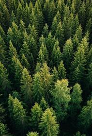 Русский лес: переработка, вместо передела