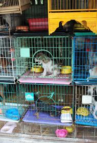 В Госдуму внесен законопроект о запрете торговли животными в неподобающих условиях