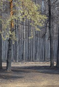 В Челябинской области 99% лесных пожаров тушат в первые сутки