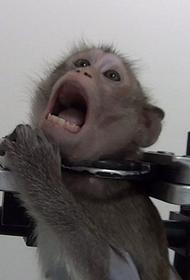 В 2021 году в России потратили ₽435,2 миллиона на лабораторных животных