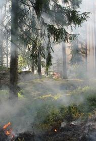 В тушении сильного лесного пожара в Анталье задействованы 15 вертолётов и 106 пожарных машин