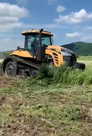 Коноплю в Приморье уничтожают гектарами