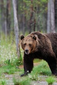 СКР ведет проверку по факту нападения медведя на туристов на территории природного парка «Ергаки» в Сибири
