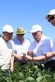 Кубанские депутаты ознакомились с достижениями селекционеров подсолнечника и сои