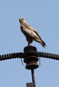 Кубанские энергетики установили на ЛЭП три тысячи птицезащитных устройств