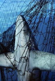 В Индонезии запретили крупные морские сети