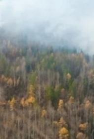Якутия: лицом к лицу с лесными пожарами