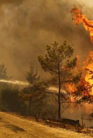 Причина серьёзных лесных пожаров в Турции до сих пор не установлена