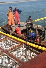 Рыбопромышленники в Хабаровском крае требуют пересмотра распределения квот