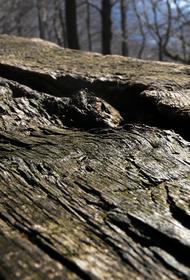 В Москве в ночь на 3 августа ветер повалил 26 деревьев
