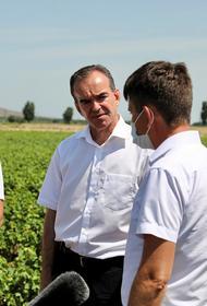 Губернатор Кубани: регион выходит в лидеры в производстве винограда в России