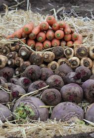 В Хабаровском крае фермерам негде хранить урожай