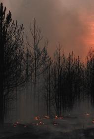 Число задымленных населенных пунктов в Иркутской области выросло до 417, сообщили в ГУ МЧС