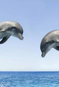 Защитники животных передали губернатору Петербурга письмо против строительства дельфинария