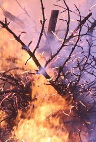 Жители села Кальвица в Якутии заявили об отказе от расселения из-за лесного пожара