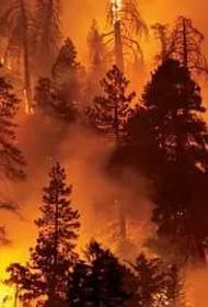 Лесные пожары в Греции продолжают разрастаться