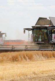 В Ростовской области собрали самый большой в России урожай ранних зерновых