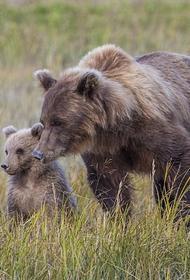 Отсутствие взрослых наставников грозит животным вымиранием