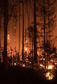 Пожар из Мордовского заповедника добрался до железной дороги в Нижегородской области, движение поездов изменено