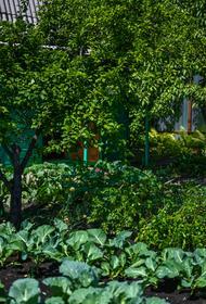 Куда садоводы Челябинской области могут сдать излишки урожая