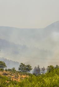 Мэр турецкого Бодрума сообщил, что вновь посаженные после пожара леса назовут именами погибших российских летчиков