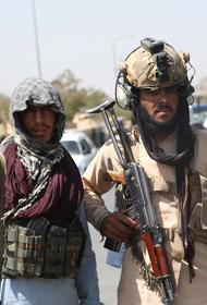 Представитель талибов Муджахид сообщил о формировании комитета по вопросам и проблемам СМИ