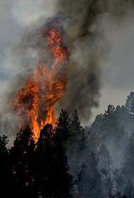 В Самарской области из-за лесного пожара уничтожены 18 строений в двух селах