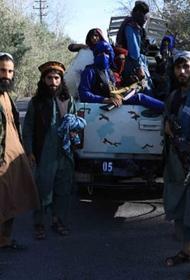 Запрещенный «Талибан»* запрещает запрещенные наркотики и запрещенный ваххабизм