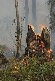 В Тольятти горит лес на площади 8 гектаров