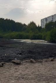 В Перми из-за жары полностью высохло Утиное болото